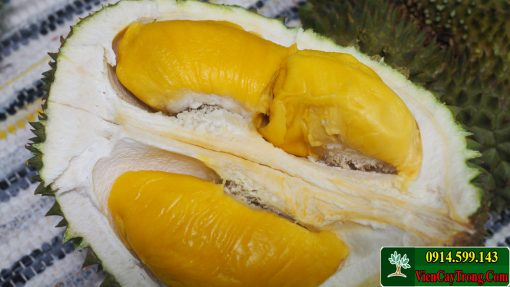 musang king durian